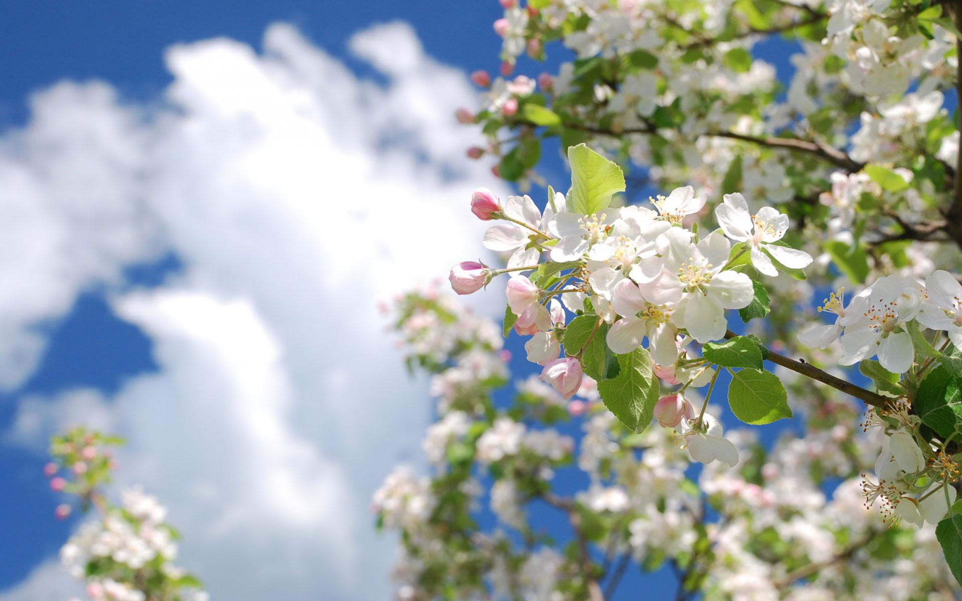 Фотообои весна цветы