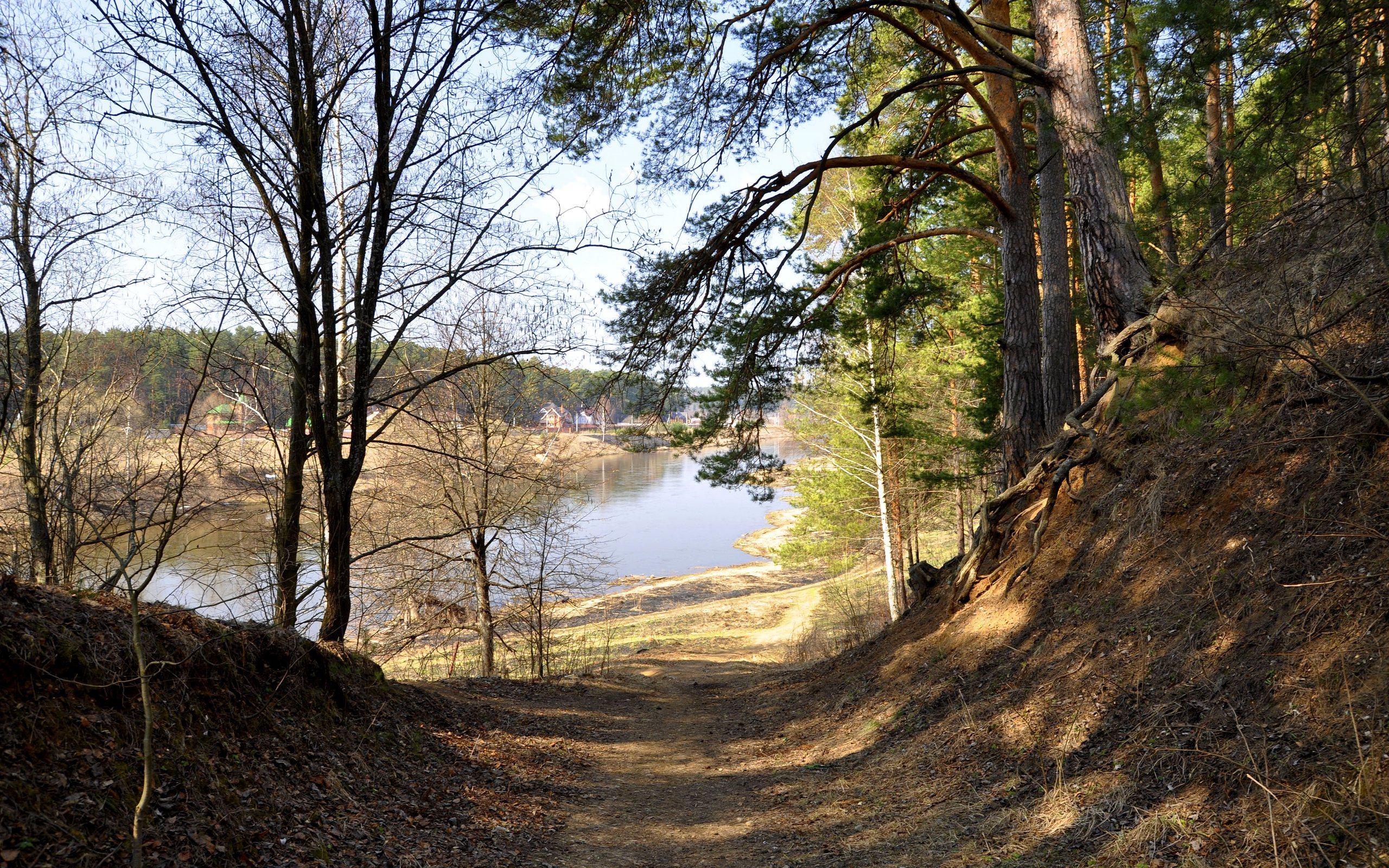 Живые картинки лес весной